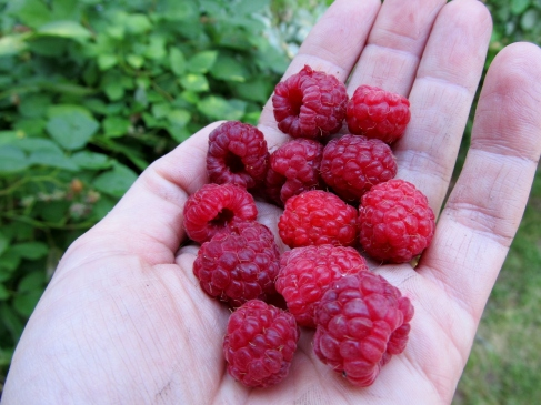 fresh raspberries (Photo: Kat B./travelgardeneat)