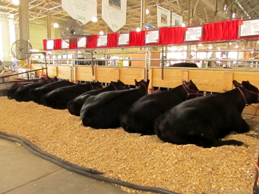 One In 164 694 People A Day At The Minnesota State Fair
