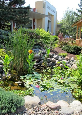 MN Water Garden Society exhibit
