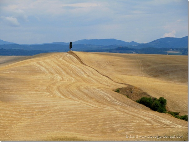 Solitary Cypress ~ Val d'Orcia region of Tuscany