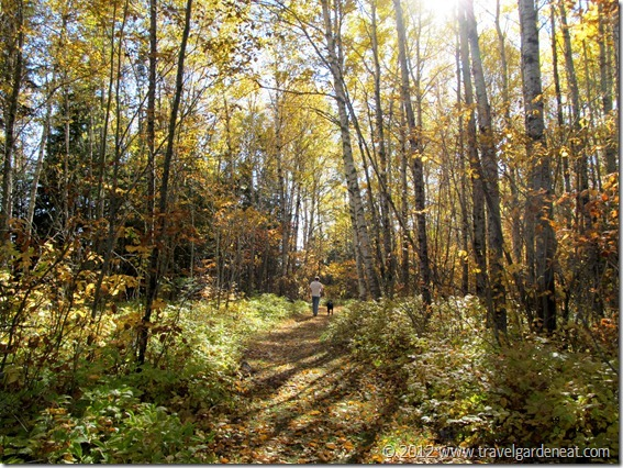 Timberdoodle Trail ~ Judge C.R. Magney State Park (Minnesota)