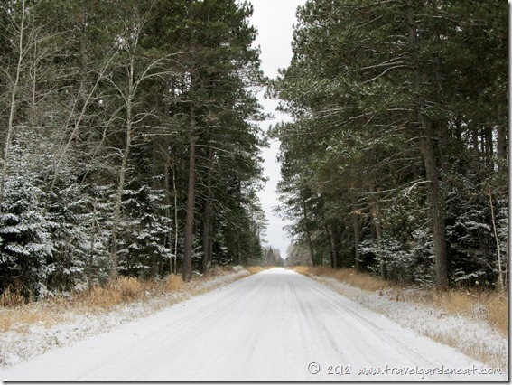 Wintry pines lining a Northern Minnesota road