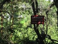 Along the Pipiwai Trail ~ Maui