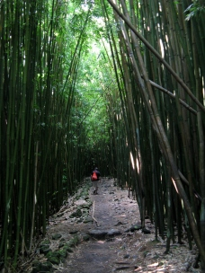 Bamboo forest on the Pipiwai Trail ~ Maui