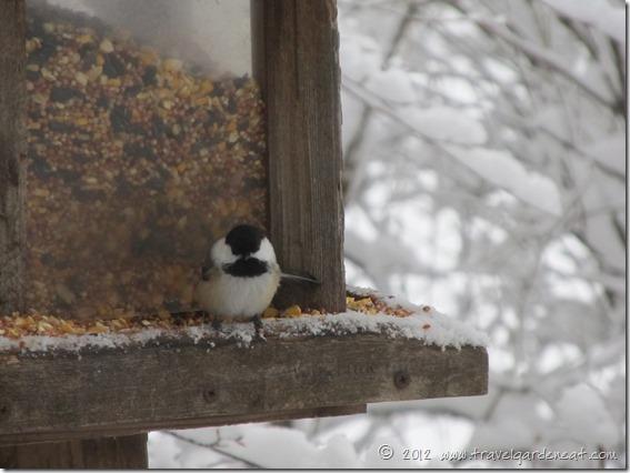 chickadee feeder 12_9_12