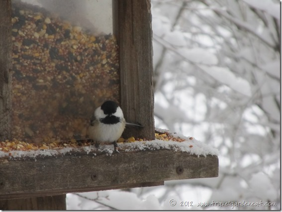 chickadee feeder 12_9_12