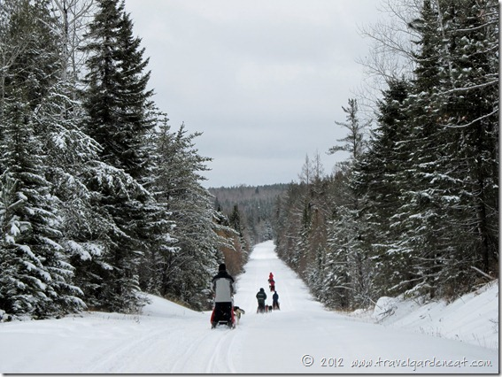 On the trail with White Wilderness Sled Dog Adventures