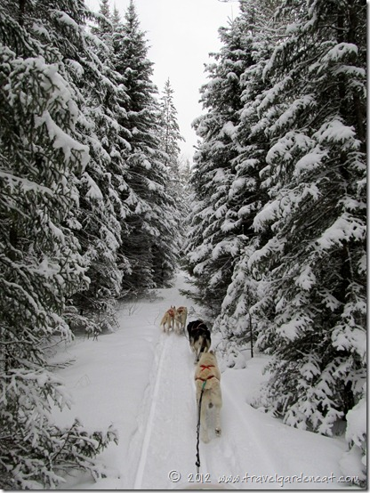 Dog Sledding with White Wilderness Sled Dog Adventures