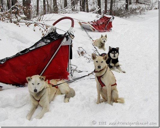 Lunch break on the trail ~ White Wilderness Sled Dog Adventures