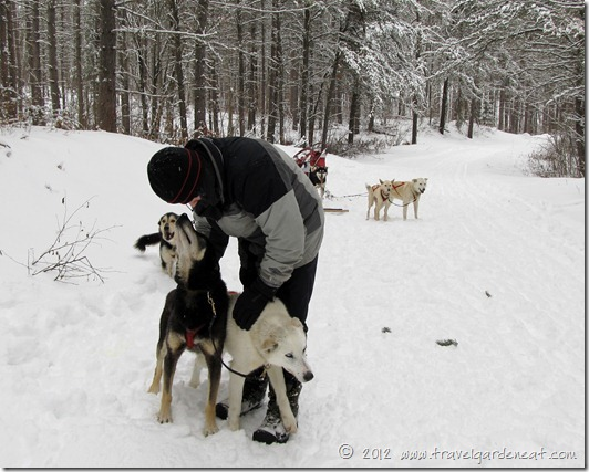 Praising the dogs for a nice morning run ~ White Wilderness Sled Dog Adventures