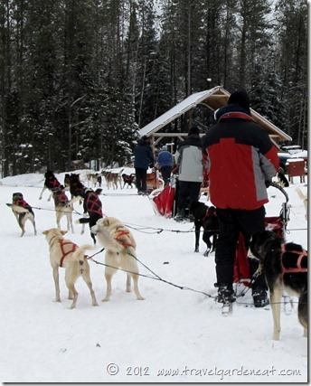 White Wilderness Sled Dog Adventures -- ready to hit the trail
