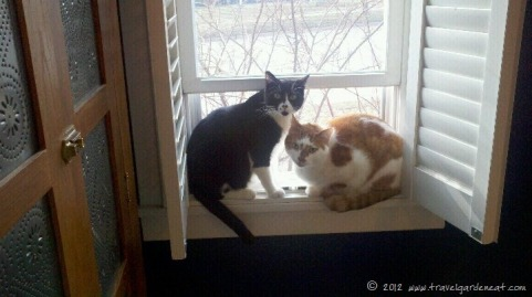 The cats enjoying window time (March)