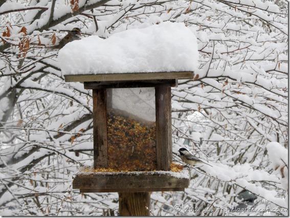 white throated sparrow chickadee feeder 2 12_9_12