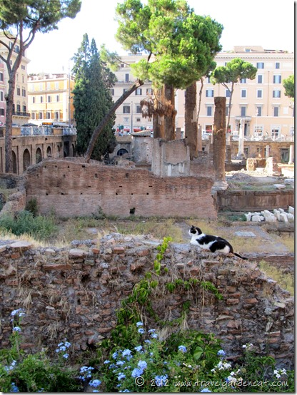 Rome's Torre Argentina Cat Sanctuary