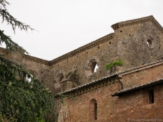 Plants take root in the old walls