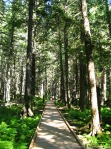 Trail of Cedars