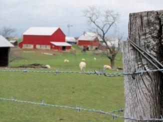 Amish farmhouse in Ohio