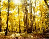 Golden sunlight in autumn