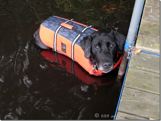 Kruger ready for a swim in his doggy lifejacket