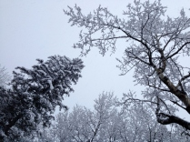 Snowy branches decorating the gray sky