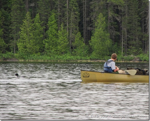 Loons on Long Island Lake, BWCA