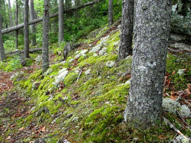 BWCA forest floor