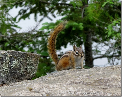 Chipmunk in the BWCA