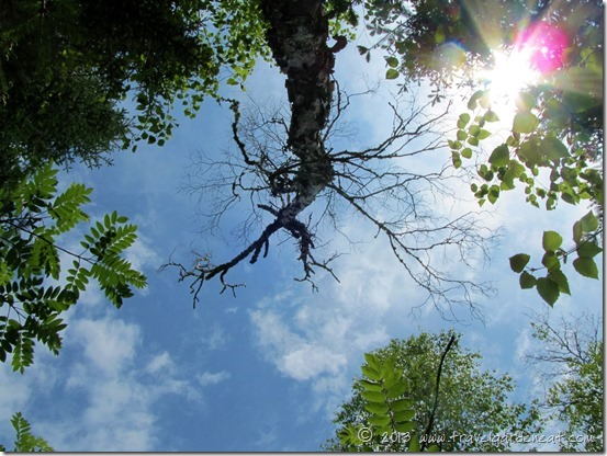 Looking up, up, up in the Boundary Waters