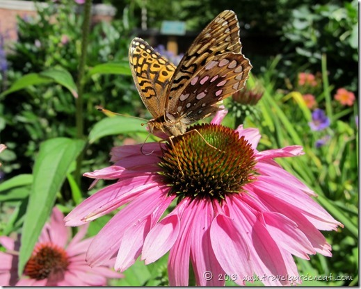 Butterfly at Glensheen Mansion's gardens ~ August 2013