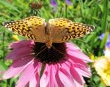 glensheen-butterfly-2-2013.jpg