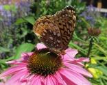 glensheen-butterfly-3-2013.jpg