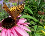 glensheen-butterfly-4-2013.jpg