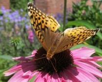 glensheen-butterfly-5-2013.jpg