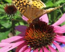 glensheen-butterfly-6-2013.jpg