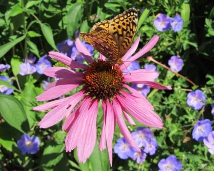 glensheen-butterfly-7-2013.jpg