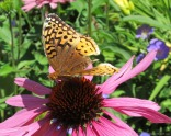 glensheen-butterfly-9-2013.jpg