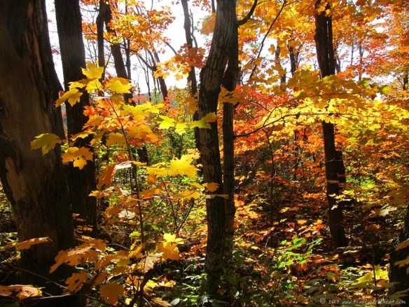 Autumn colors along Minnesota's Oberg Trail