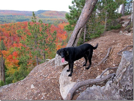 Best friend on Sawmill Dome, Superior Hiking Trail