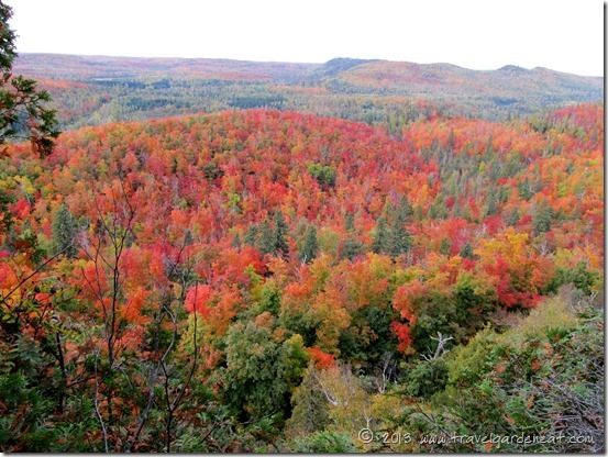Maples on fire with color from the Sawmill Dome trail, Superior Hiking Trail