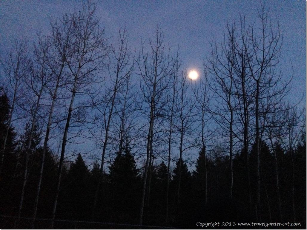 November moonlight