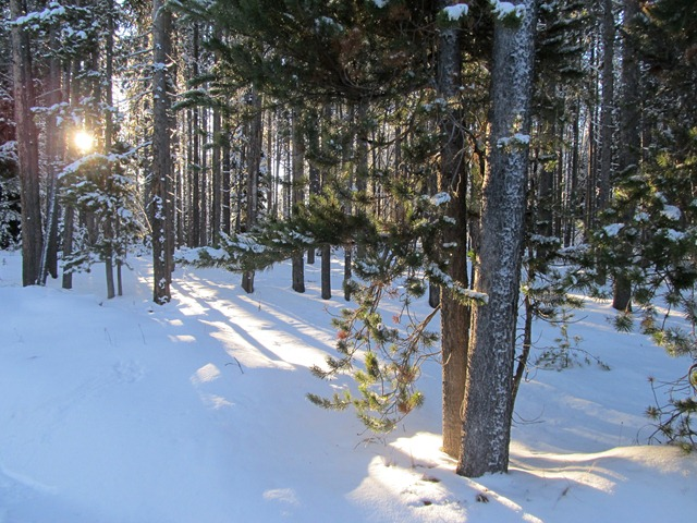 Forest along the Rendezvous Trails