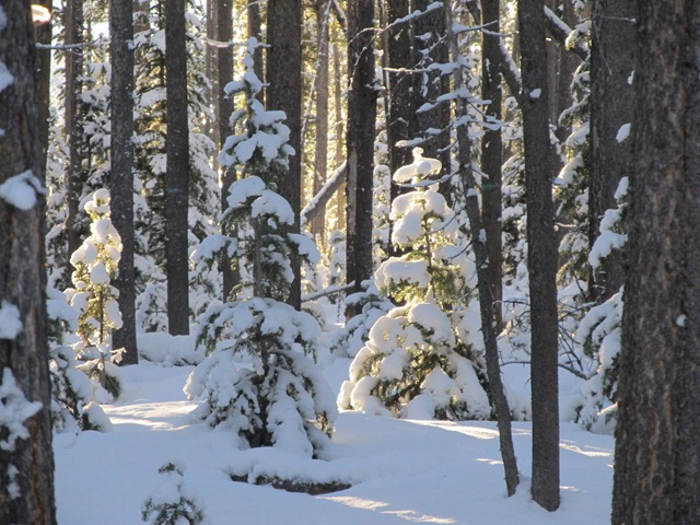 Snow-covered trees off the Rendezvous Trails