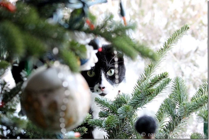 One cat under the Christmas tree