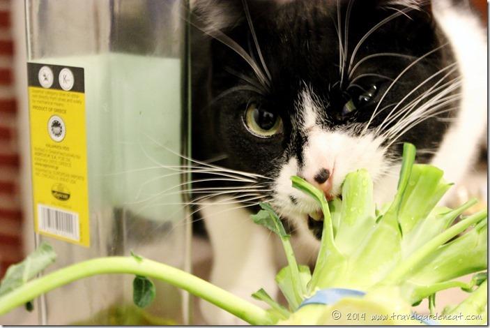Feline kitchen help