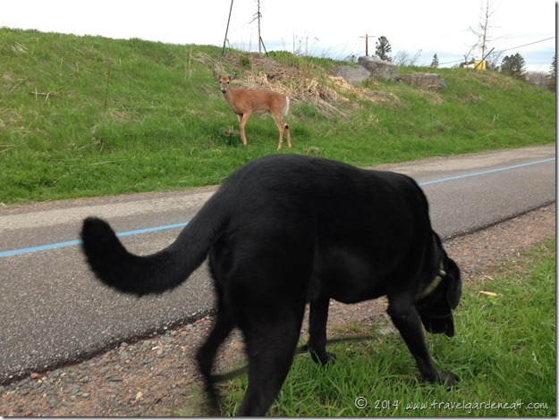 Deer and Dog ~ Peaceful Coexistence