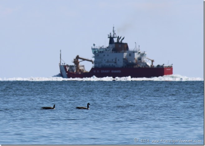 Canada Geese on Lake Superior