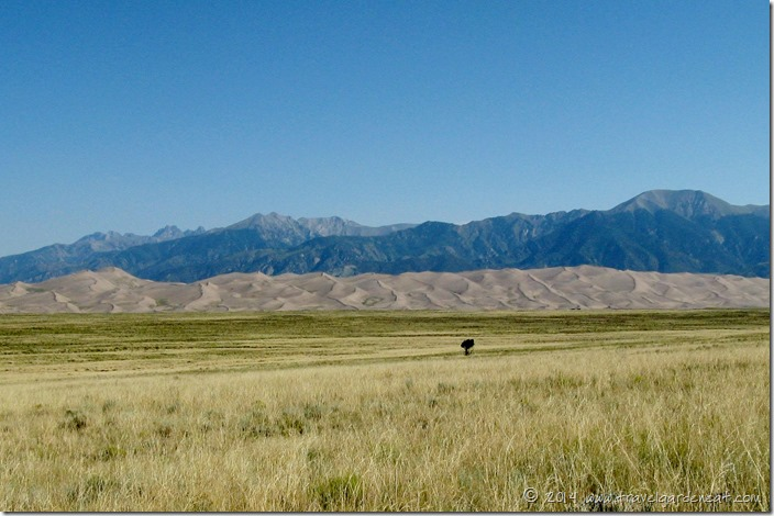 Parting view of Great Sand Dunes National Park, Colorado