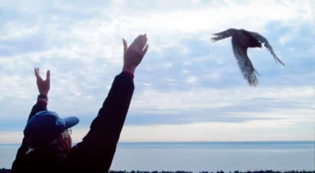 Raptor release