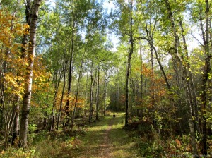 Fall Trails in Lester Park