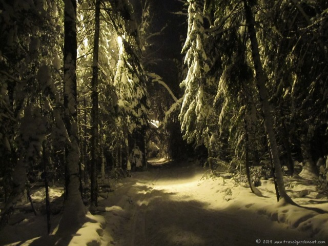 Magical Night Skiing in Winter